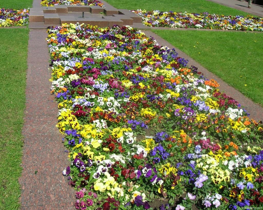 Цветы в бордюре фото