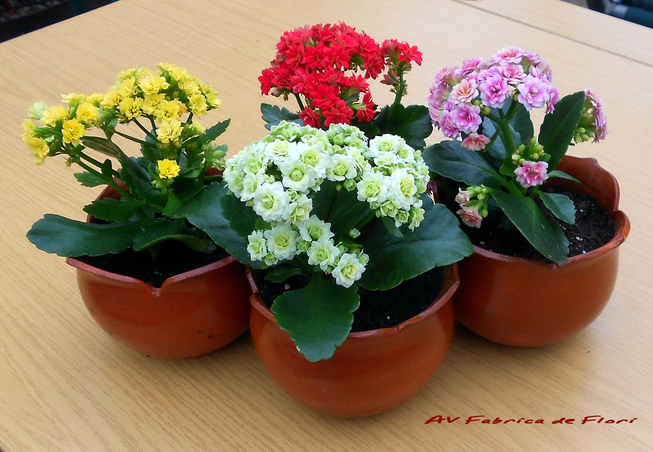Каталог комнатных растений с фото и названиями 23