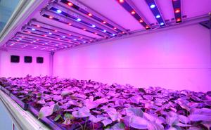 Использование ультрафиолетовых фитоламп