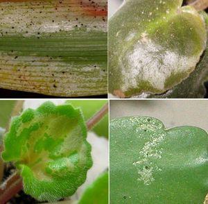 Причины болезней комнатных растений