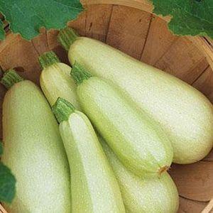 Популярные виды и сорта кабачков