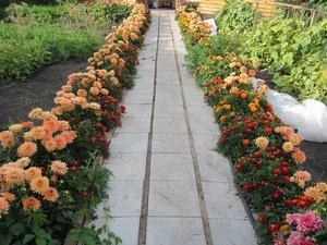 Бордюрные цветы вдоль дорожки