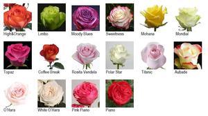 Разновидности садовых роз