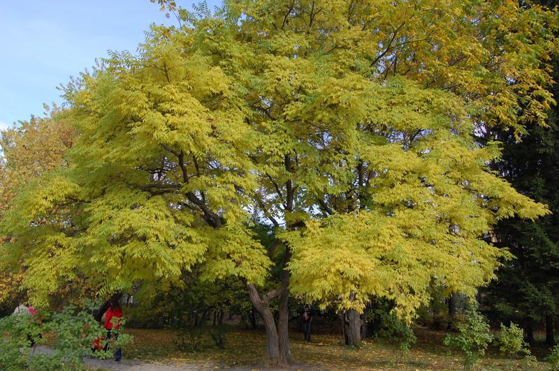 речь деревья приморского края фото названия сегодня так оформляют