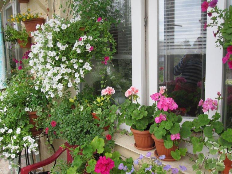 Как посадить цветы на балконе или лоджии? как учесть стороны.