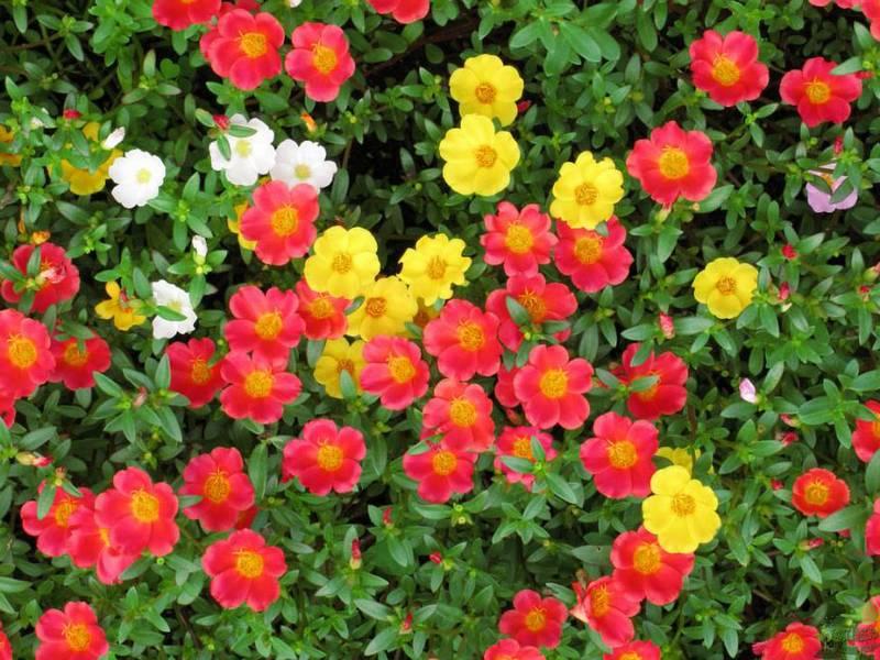 переходе мельчайших полуденный жар цветы фото файлы