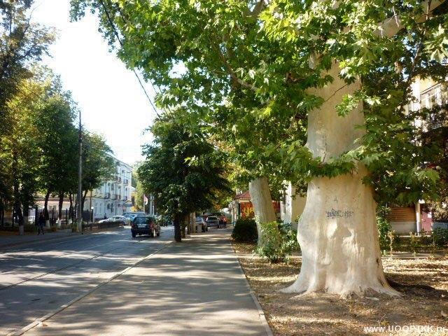 платановые деревья в сочи фото сделать