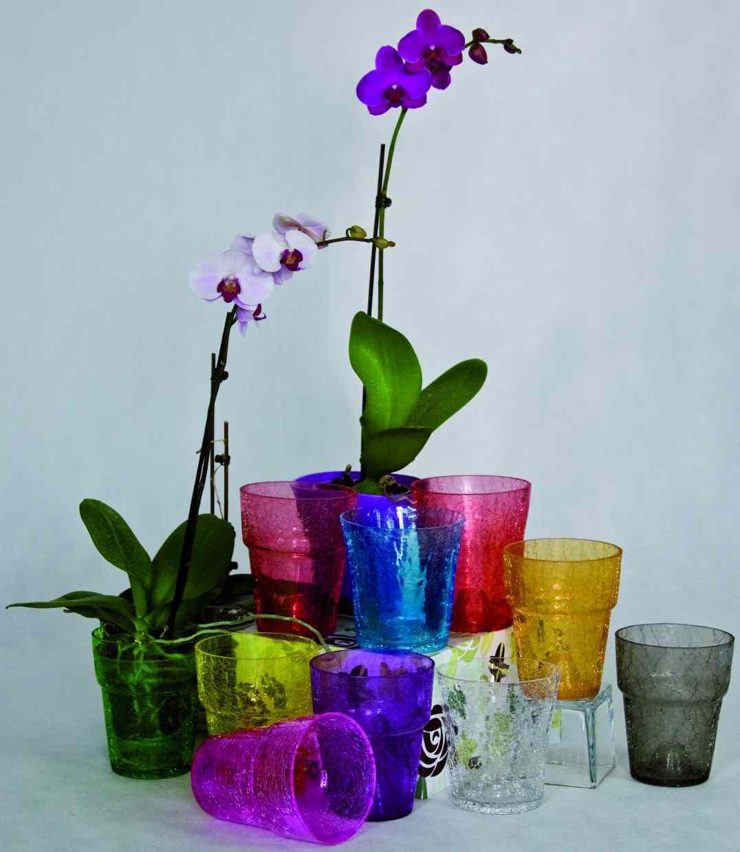 горшки для орхидей какие должны быть фото либерального дискурса