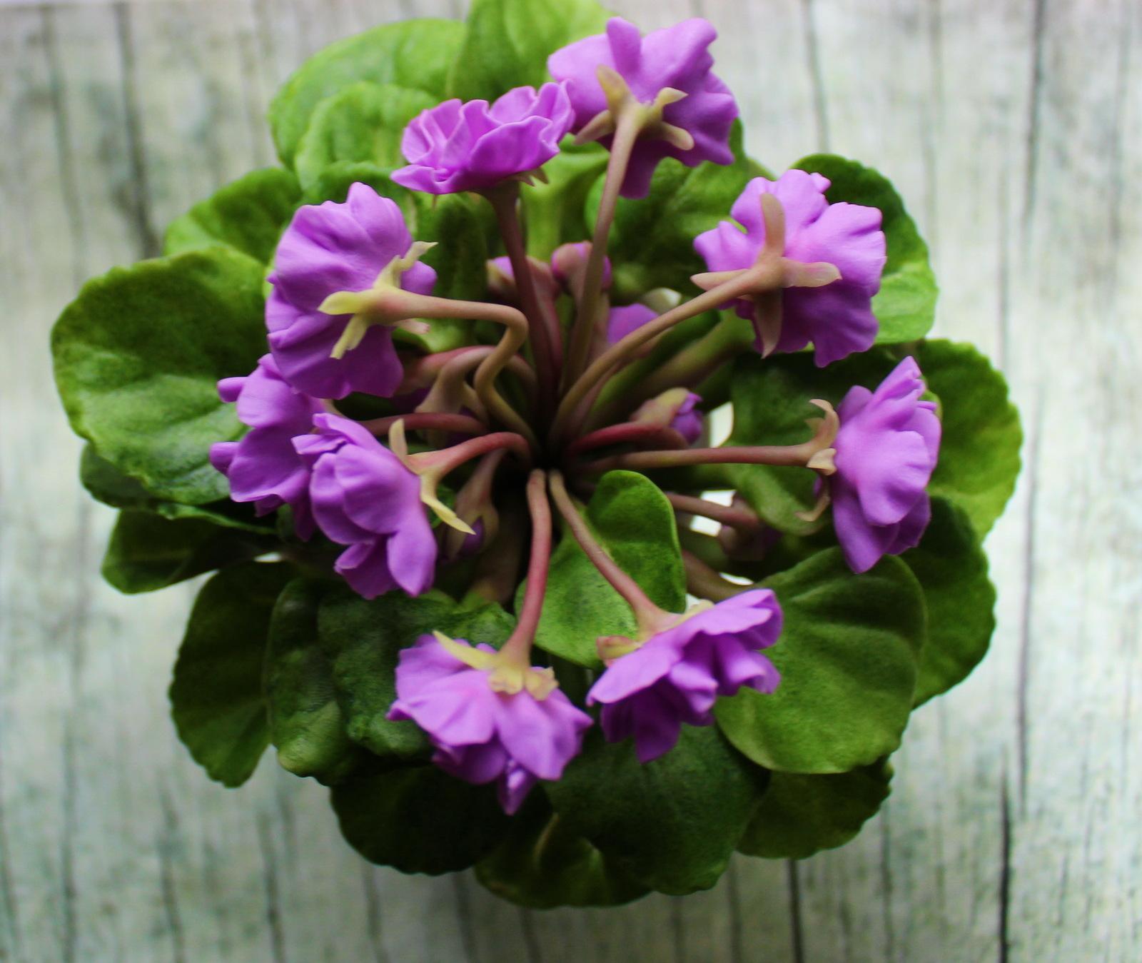 Название и фото цветов фиалок
