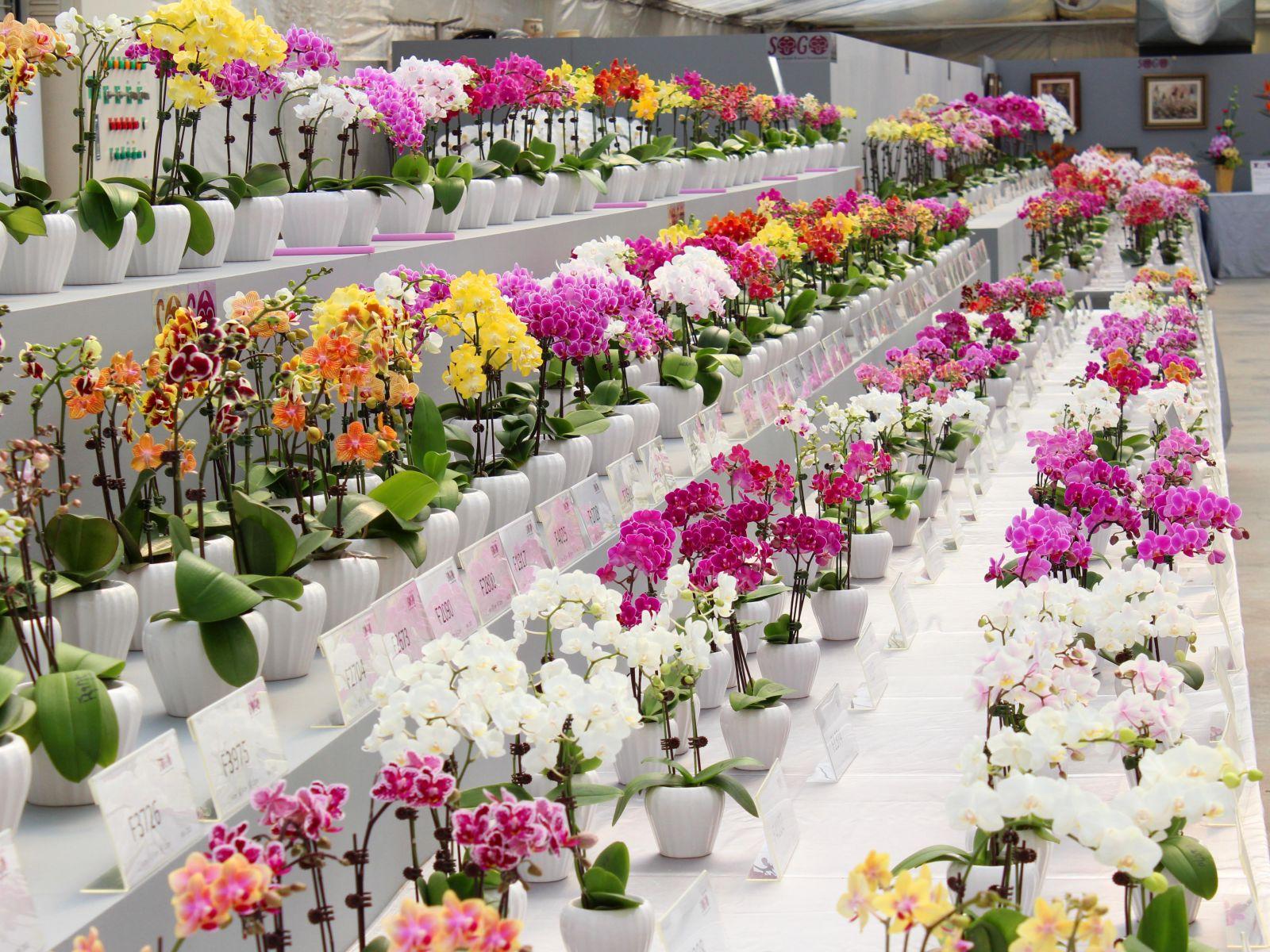 Цветов санкт-петербург, красивые цветы в магазинах названия и фото