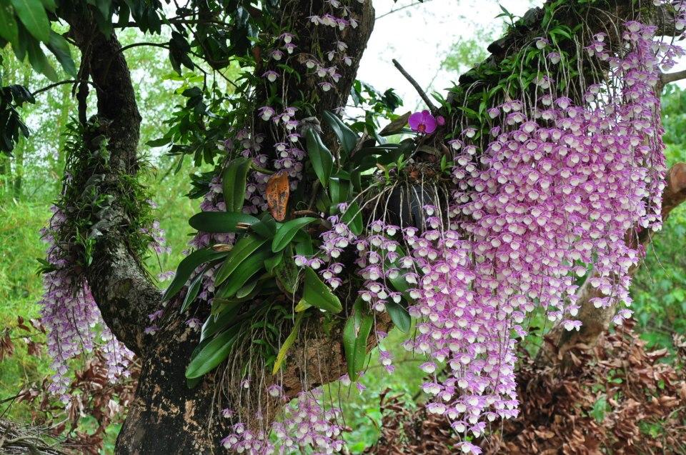 орхидеи в дикой природе фото сообщали, что