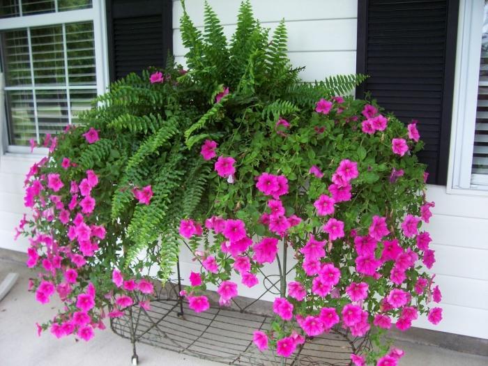 Как правильно осуществлять ампельное выращивание петунии в 75