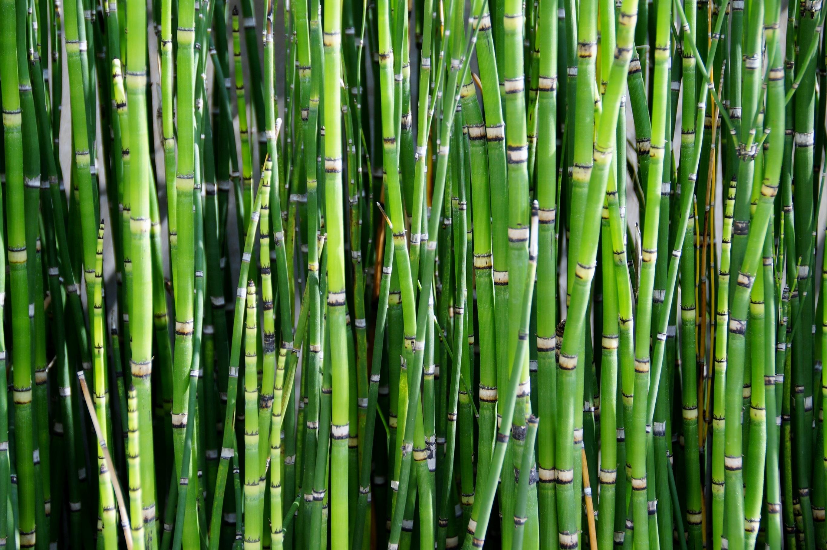 тростниковые цветы фото результате