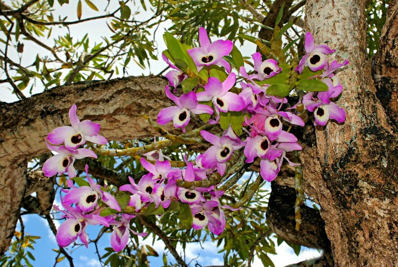 Растения эпифиты это удивительный пример изобретательности природы